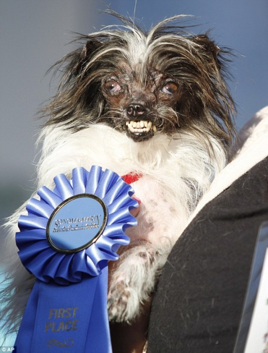 Worlds-Ugliest-Dog-Award-531x700
